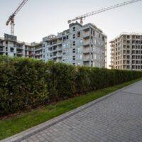 Platanowy-Park-2021-08-25-30-1024x682